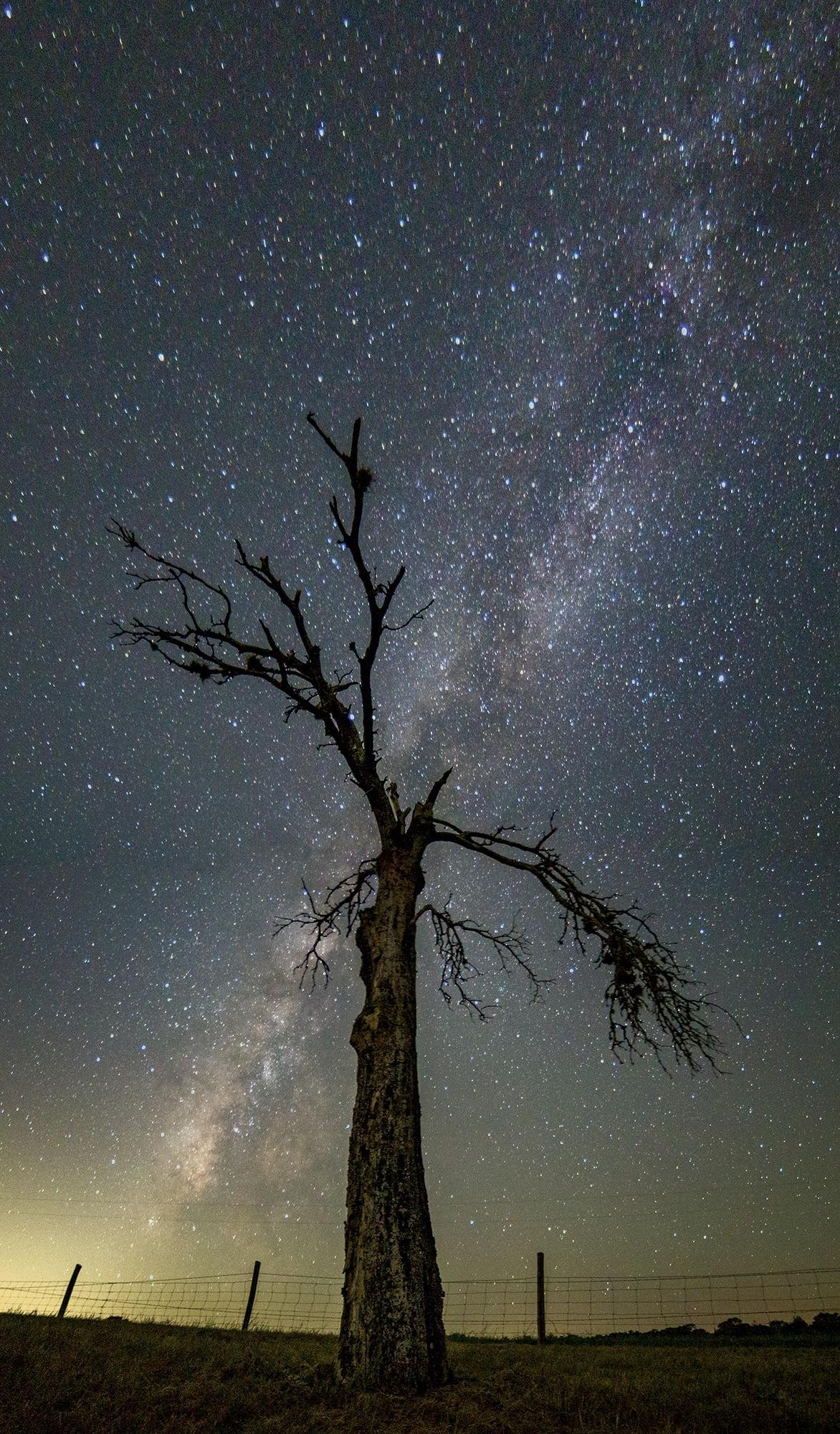 "A dead tree on Creek Road intersects with the Milky Way. ""This was just after the 2015 flooding. The water had risen so high, it had killed the tree. This where the road forks to Camp Lucy just beyond the low water crossing,"" Moreno said."