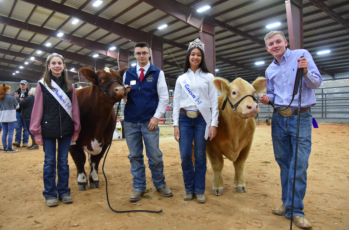 """From left to right: Duchess Rebekah McDaniel, Ambassador Ty Dahlstrom holding his steer """"Shorty,"""" Queen Mia Cariaga, and Cade Oldham (a DSHS senior) holds his steer called """"Butterball."""" CENTURY NEWS PHOTO BY JOHN PACHECO"""