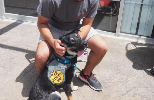 As PAWS prepares to move to Dripping Springs, they've held several adoption events around town for their pups.